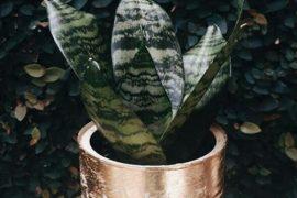 planta-na-lata-agripino-grieco-foto