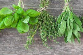 planta na lata tempero ervas meier